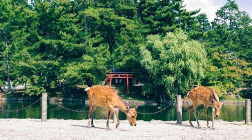 去日本旅游景点推荐,日本旅游攻略