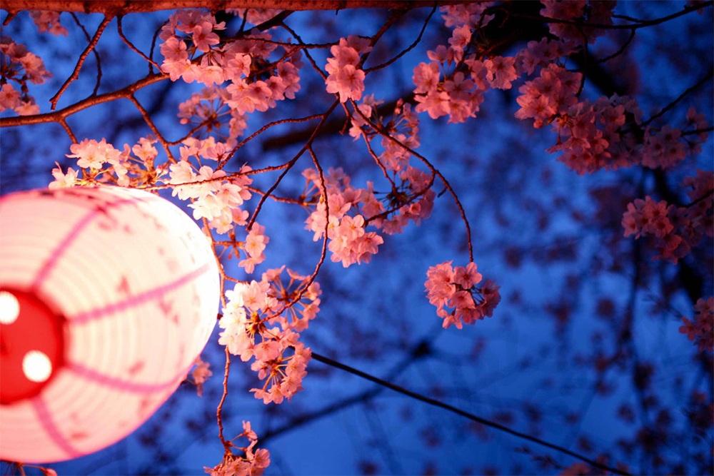 2020除了武汉大学,武汉还有哪里可以看樱花?,武汉旅游攻略