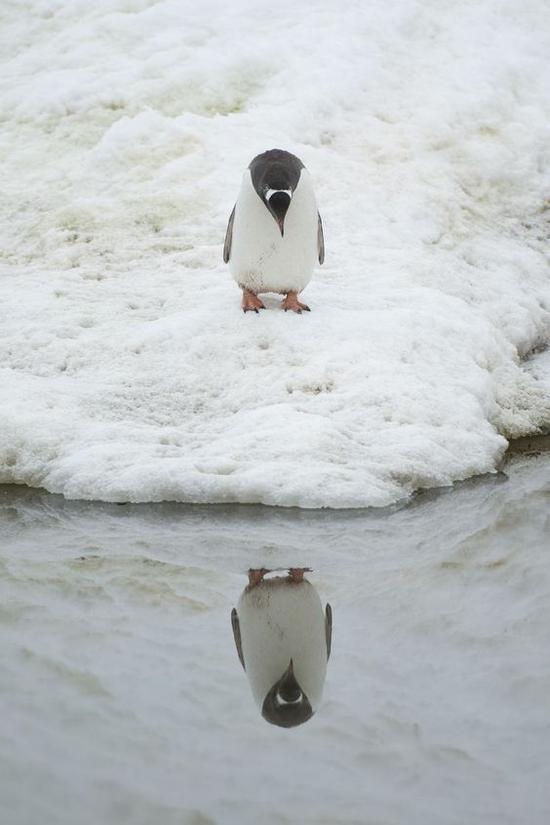 南极旅行没你想的那么遥不可及 实用攻略拿好不谢