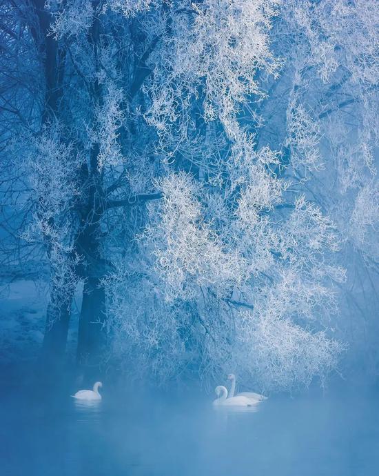 新疆迎来初雪 惊艳世界的神仙风景更美了