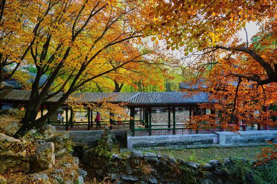 这10个小众绝美的秋景地 美到你不想回家
