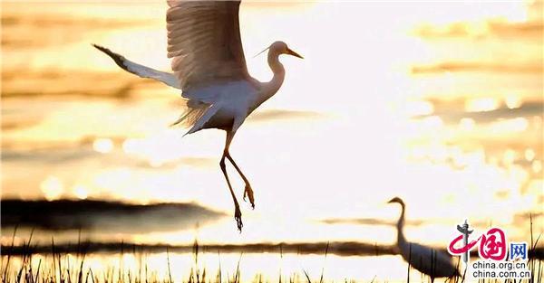 绮丽沙湖风景美如画 迁徙飞鸟春日再归来