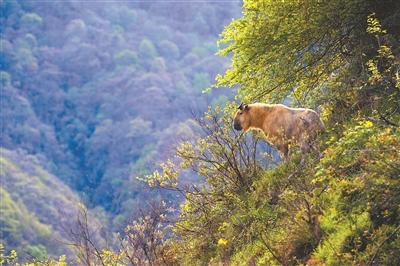 世界野生动植物日:促进人与自然和谐共生