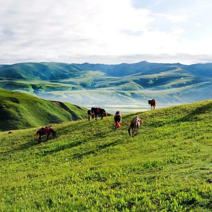 国内唯一敢叫板呼伦贝尔的草原 隐藏在川西的绿宝石!