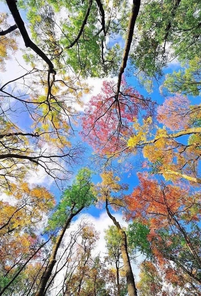 因一张秋景图刷爆网络 这个落地签国家的秋色比贝加尔湖更夺目