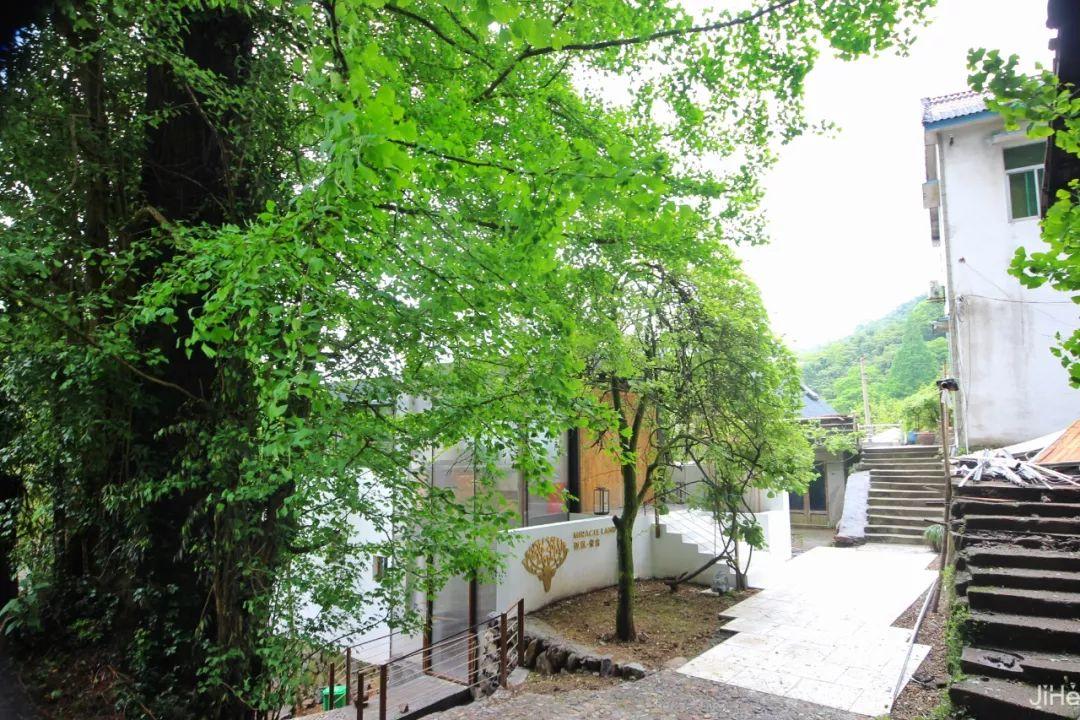 银杏下的小京都,安吉迈岚酒店