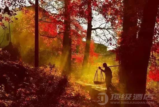 藏在临安山野美景秘境中的野奢帐篷民宿,酷似一副色彩绚丽的油画